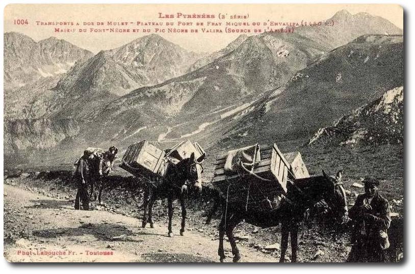 Mulets au Port Envalira